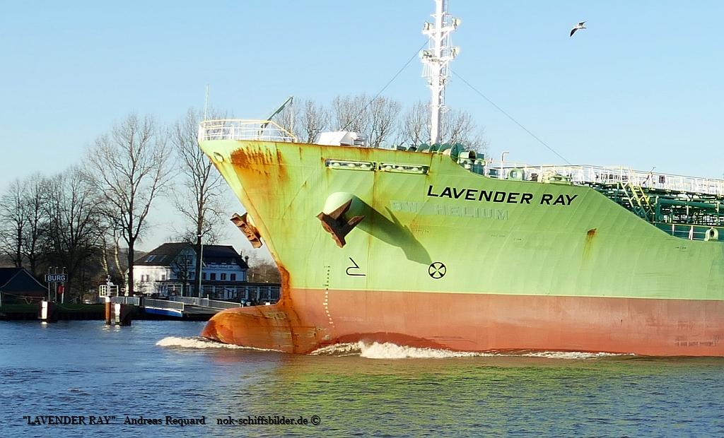 LAVENDER RAY-Bug