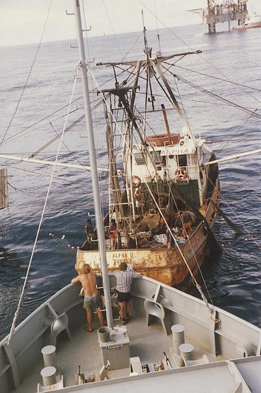 BERLINERTOR-  Frisch Fisch  beschaffung
